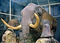 Зоологический музей Санкт-Петербурга